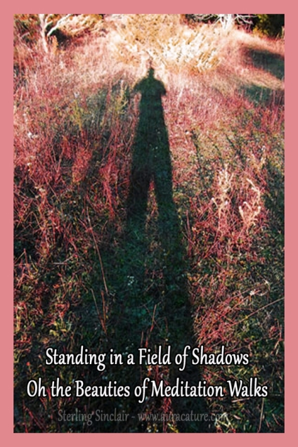 Oracle Sterling Sinclair Psychic Auracature Art Nature Walk Health and Fitness Meditation Shadows Field Photograph copy